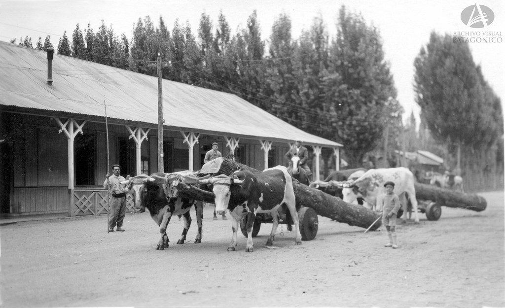 Vista Parcial del Hotel Lacar y transporte de madera con empleo de Yunta de bueyes. Ubicación: Av. San Martín hacia Elordi. Fotógrafo: Bruno Ricardo Sálamon. Año: Ca. 1936 https://www.flickr.com/photos/archivovisualpatagonico/33000943540