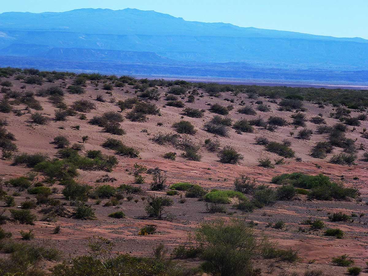 Nidadas de dinosaurios en el desierto de Auca Mahuida
