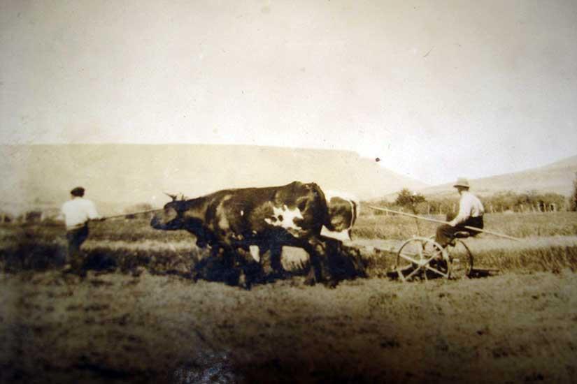 Imagen ilustrativa - Cortando pasto, 1928 - Aluminé