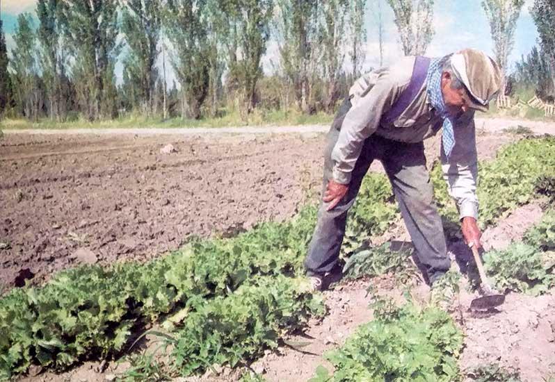 Agricultura, riego, colonos: Las colonias de regadío en La Confluencia del Limay y el Neuquén.