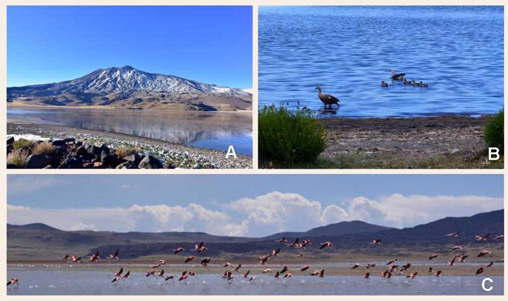 ANP El Tromen. A: Laguna del Tromen y volcán Tromen (foto: Sergio D'Abramo); B-C: Laguna del Tromen y parte de su fauna (fotografías: Paula González)