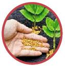 Agrominerales (fertilizantes)