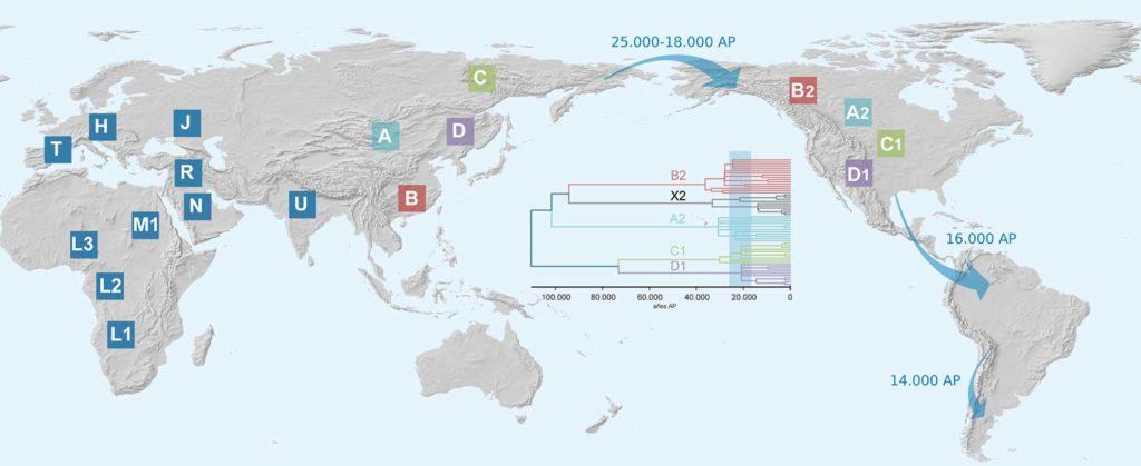 . Distribución de haplogrupos mitocondriales en el mundo y rutas probables de poblamiento de América.