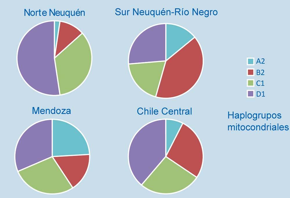 Proporción de las variantes americanas del ADNmt en la población actual de Neuquén  y de regiones vecinas.
