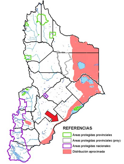 Áres de distribución en Neuquén de la Copetona: