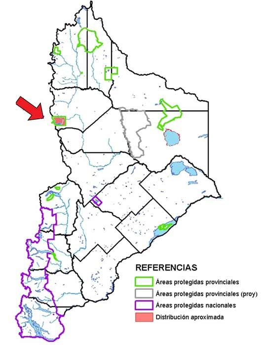 Área de distribución en Neuquén de la Lagartija de Copahue (Liolaemus neuquensis)