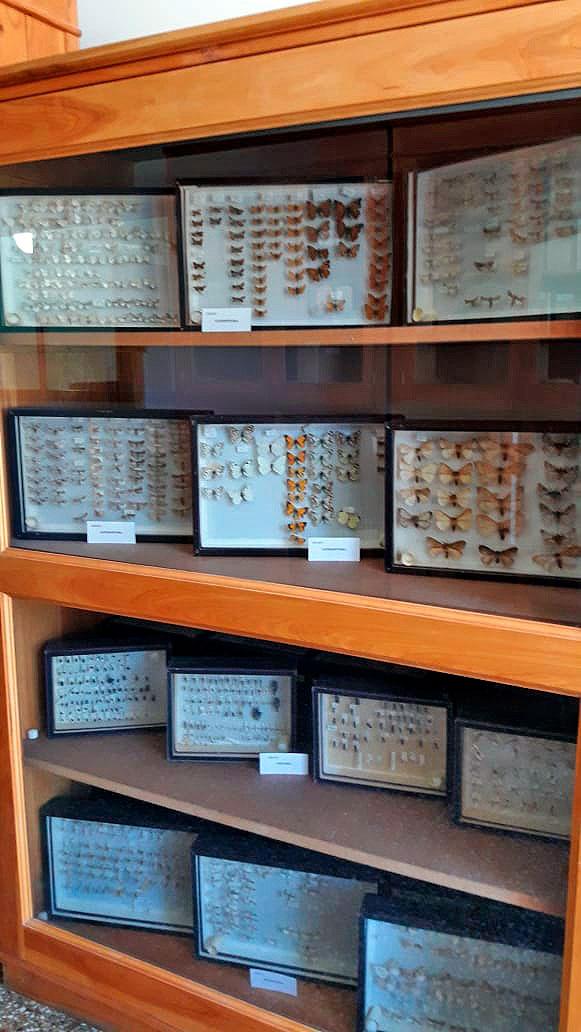 La vitrina que contiene la colección de especies donada al AUSMA.