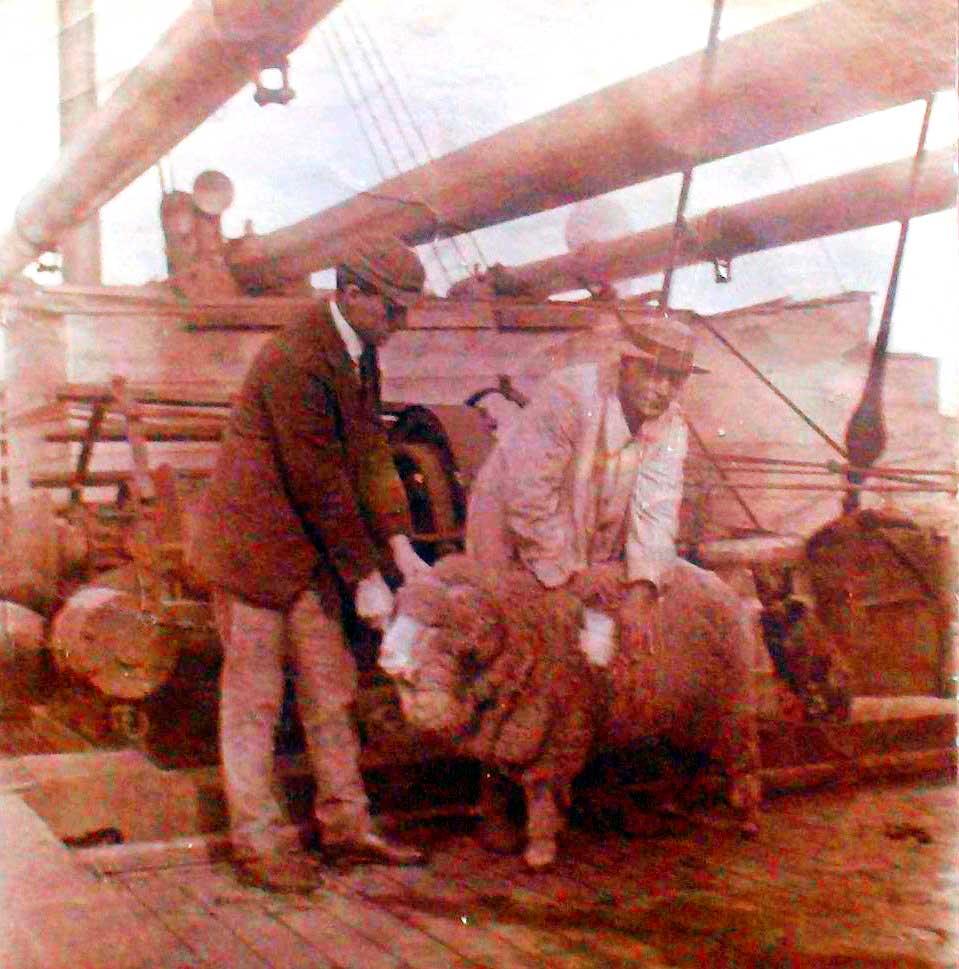 Guy Dawson, embarcado, observando un ejemplar merino. Foto de Betty Dawson