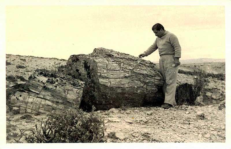 EL Ing. Lucas Tortorelli en plena actividad de investigación forestal.