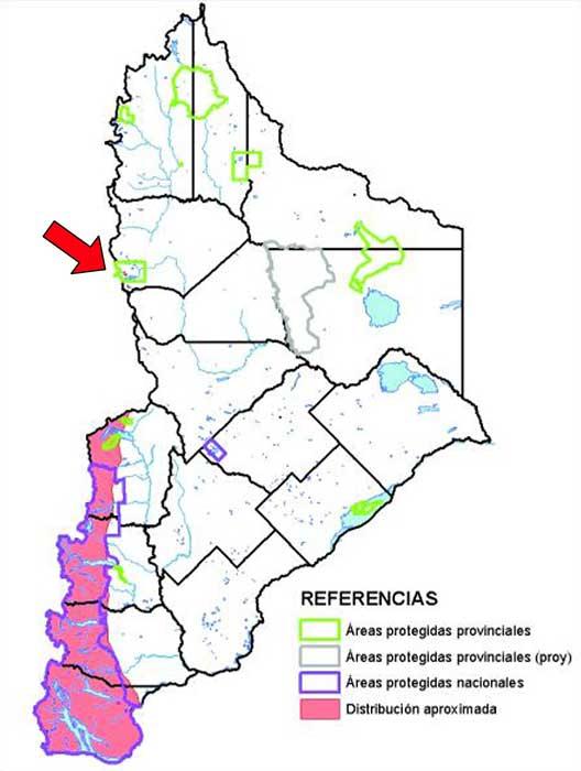 Distribución en Neuquén del Monito del Monte Monito del monte (Dromiciops gliroides)